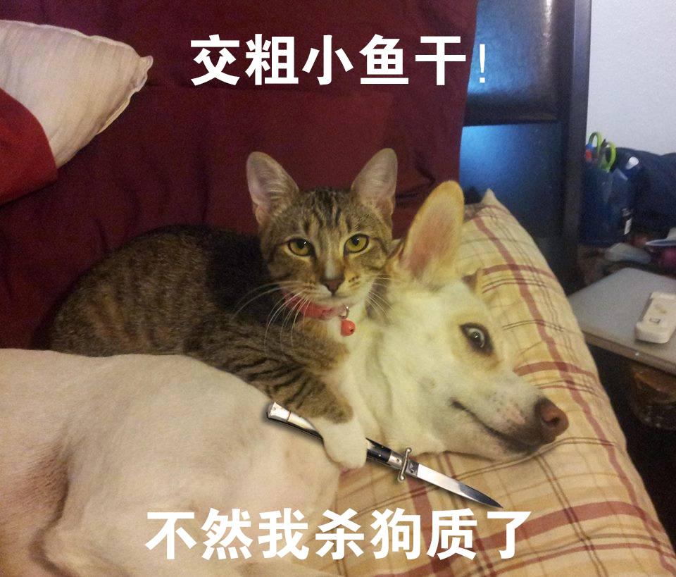 猫奴信不信我杀狗