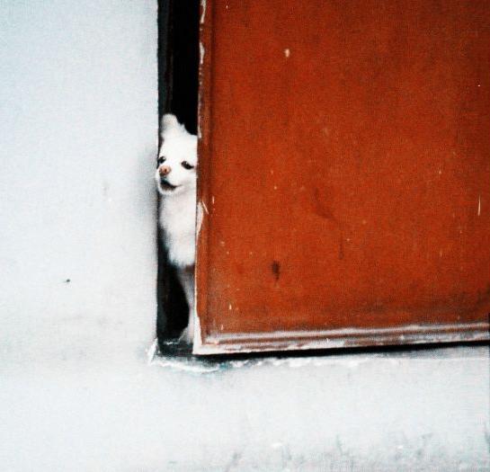 一只小狗想从门缝里钻出来