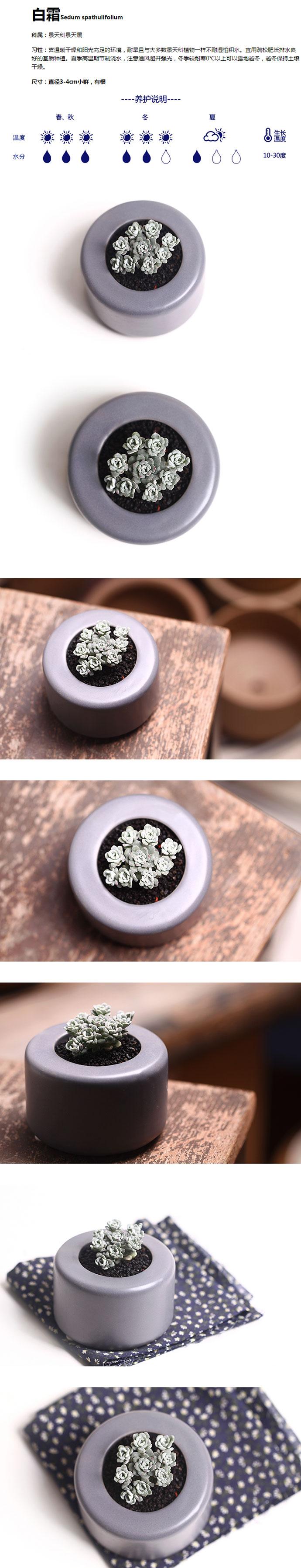 点翠苑 白霜