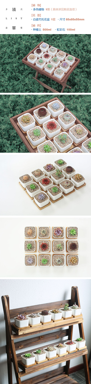 壹分皿 多肉植物组合盆栽套餐