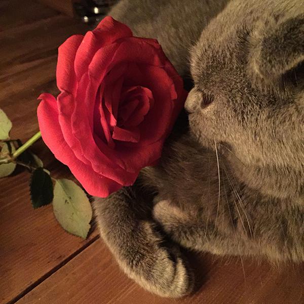 小猫和玫瑰花