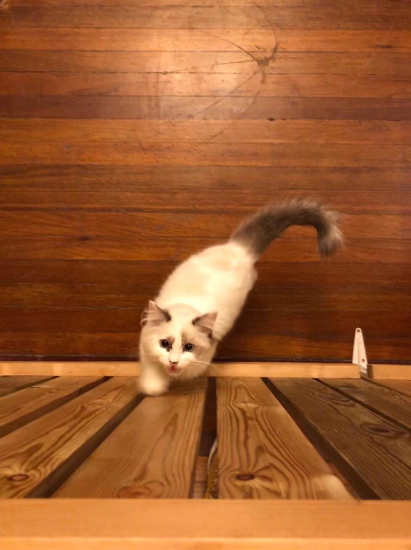 魔都的一家猫咖