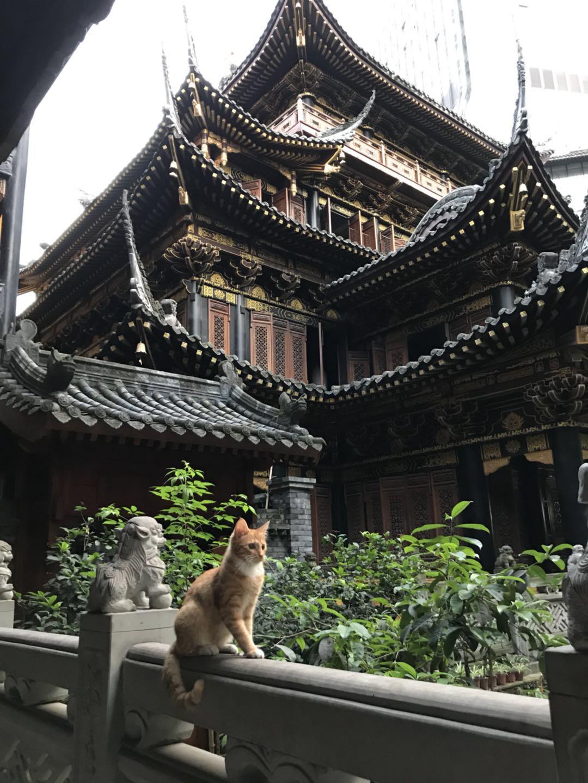 罗汉寺的小猫
