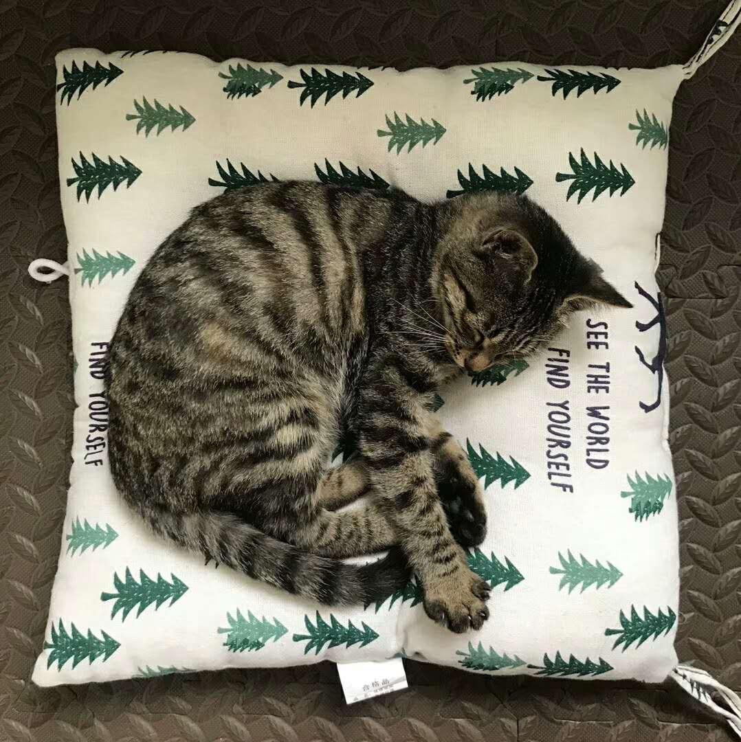 睡着的芝麻