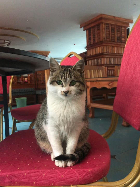 一只绿眼睛的猫猫